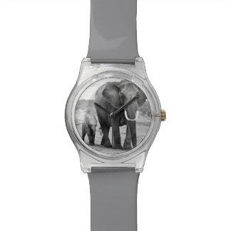Female African elephant and three calves, Kenya. Wristwatches