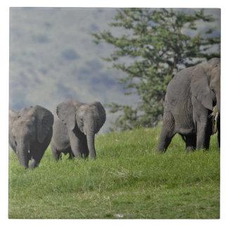 Female African Elephant with baby, Loxodonta 2 Large Square Tile