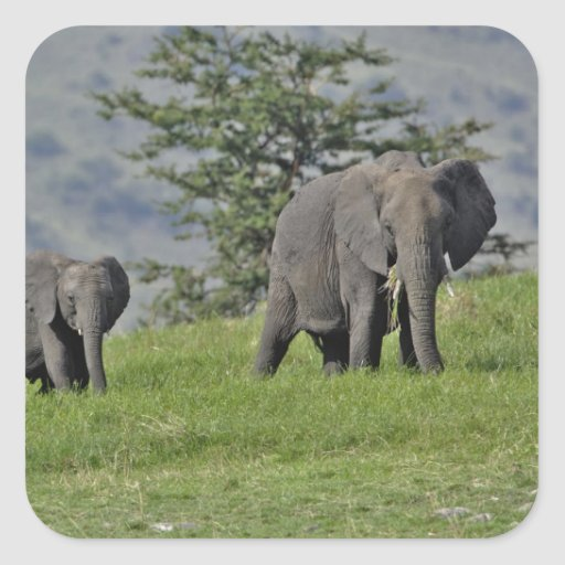 Female African Elephant with baby, Loxodonta 2 Stickers