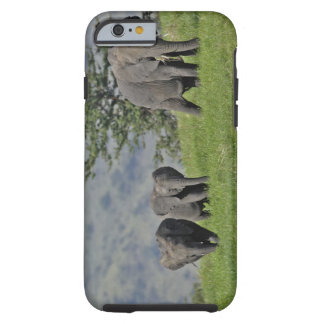 Female African Elephant with baby, Loxodonta 2 Tough iPhone 6 Case