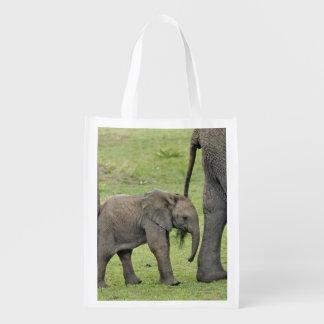 Female African Elephant with baby, Loxodonta 3