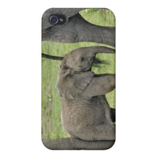 Female African Elephant with baby, Loxodonta 3 iPhone 4/4S Case
