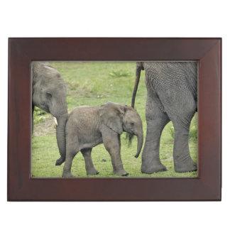 Female African Elephant with baby, Loxodonta 3 Keepsake Box