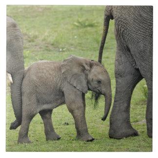 Female African Elephant with baby, Loxodonta 3 Large Square Tile