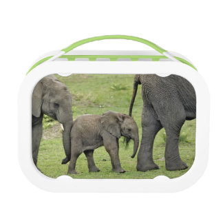 Female African Elephant with baby, Loxodonta 3 Lunchboxes
