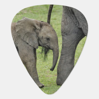 Female African Elephant with baby, Loxodonta 3 Plectrum