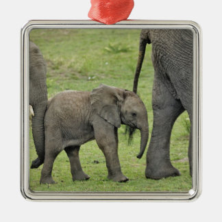 Female African Elephant with baby, Loxodonta 3 Silver-Colored Square Decoration