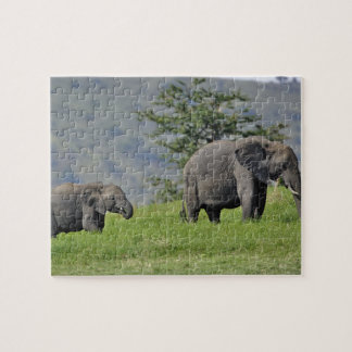 Female African Elephant with baby, Loxodonta Jigsaw Puzzle