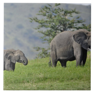 Female African Elephant with baby, Loxodonta Large Square Tile