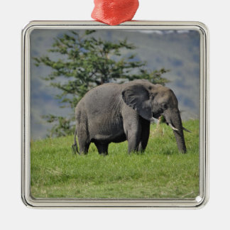 Female African Elephant with baby, Loxodonta Silver-Colored Square Decoration