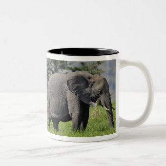 Female African Elephant with baby, Loxodonta Two-Tone Coffee Mug