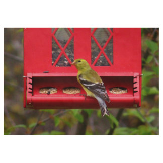 Female American Goldfinch Wood Poster