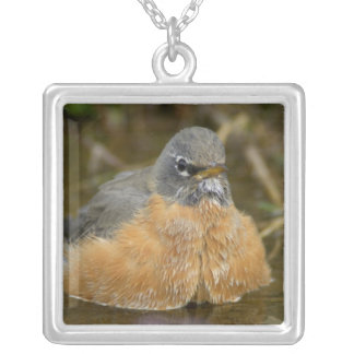 Female American Robin bathing, Yellowstone NP, Silver Plated Necklace