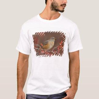 Female American Robin in Black Hawthorn T-Shirt