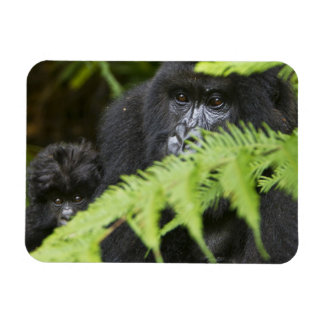 Female and juvenile Mountain Gorillas Magnet