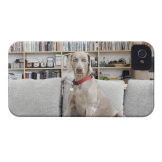 Female animal Case-Mate iPhone 4 case