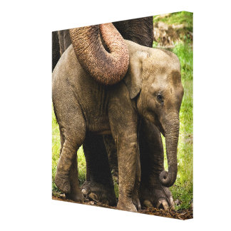 Female Asian Elephant Mother Protecting Her Baby Canvas Print