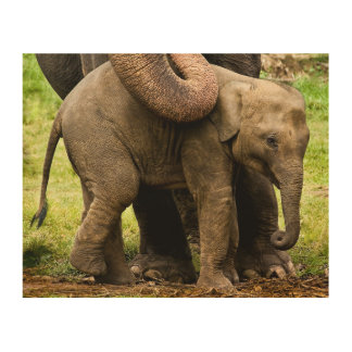 Female Asian Elephant Mother Protecting Her Baby Wood Wall Decor