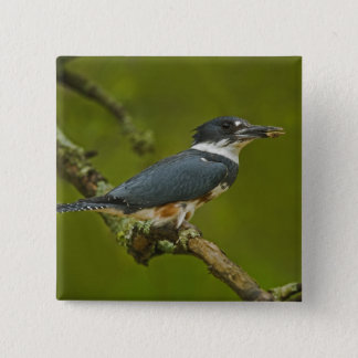 Female Belted Kingfisher with prey near nest 15 Cm Square Badge