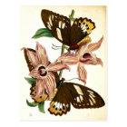 Female Birdwing Butterflies and Dendrobium orchids Postcard