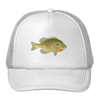 Female Bluegill - Bream - Sunfish Cap