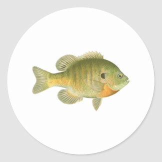 Female Bluegill - Bream - Sunfish Round Sticker