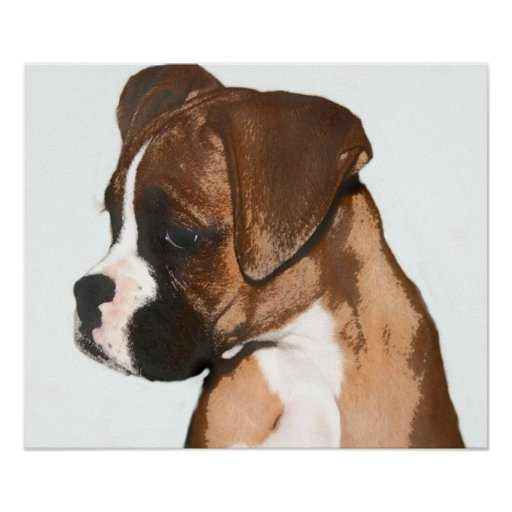 Female boxer pup poster
