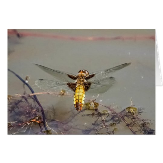 Female Broad-bodied Chaser Dragonfly Card
