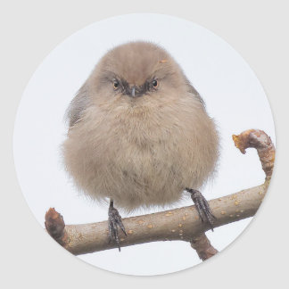 Female Bushtit in the Pear Tree Round Sticker
