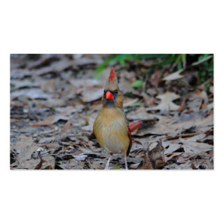 Female Cardinal 1 Pack Of Standard Business Cards