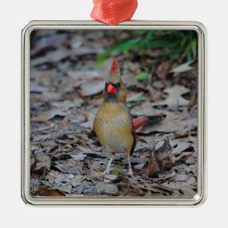 Female Cardinal 1 Silver-Colored Square Decoration