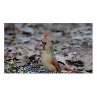 Female Cardinal 2 Pack Of Standard Business Cards