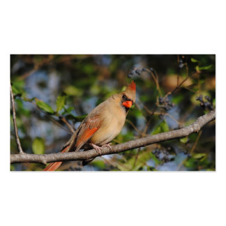 Female Cardinal 3 Pack Of Standard Business Cards