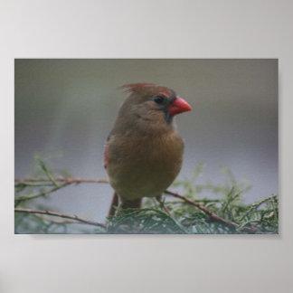 Female Cardinal Bird Photograph Print