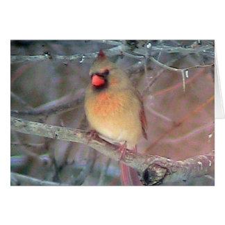 Female Cardinal Template Card