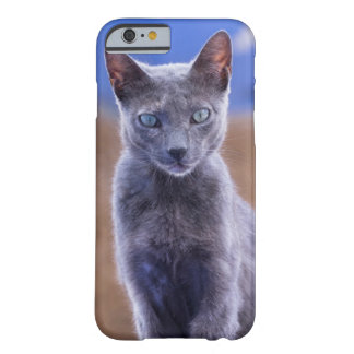 Female cat sitting, Morocco Barely There iPhone 6 Case