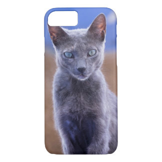 Female cat sitting, Morocco iPhone 8/7 Case