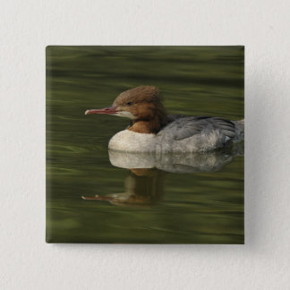 Female Common Merganser red headed sea duck 15 Cm Square Badge