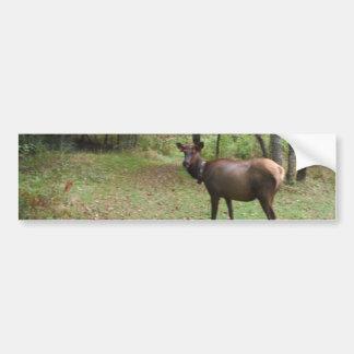 Female Elk in autumn field Bumper Sticker