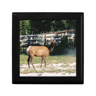 Female Elk in Yellowstone Small Square Gift Box