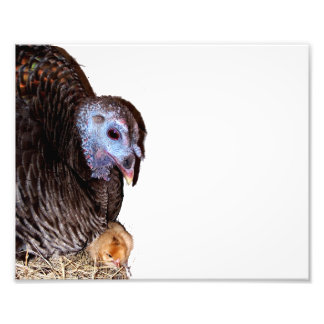 Female Florida Wild Turkey with baby chick Photo Print