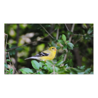 Female Goldfinch 2 Pack Of Standard Business Cards