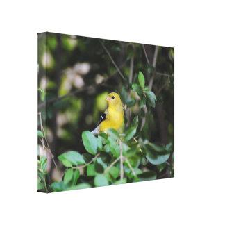 Female Goldfinch Canvas Print