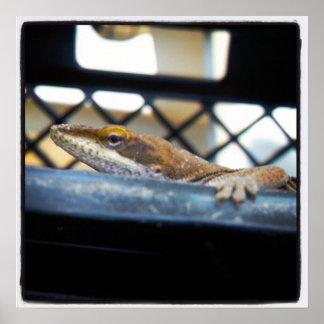 Female Green Anole Lizard Photo Print