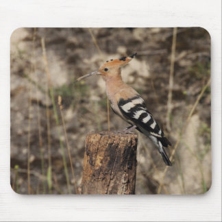 Female Hoopoe On Trunk Mouse Pad