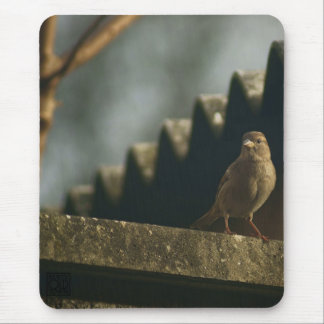 Female House Sparrow Mouse Pad