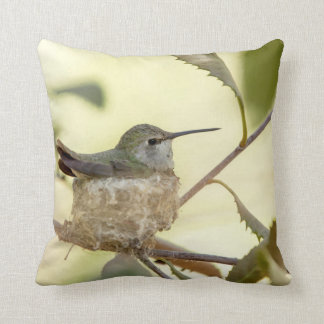 Female hummingbird on her nest cushion