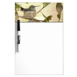Female hummingbird on her nest Dry-Erase boards