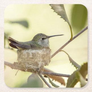 Female hummingbird on her nest square paper coaster