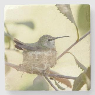 Female hummingbird on her nest stone coaster